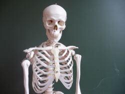 Szkielet - kości